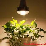 How To Use Grow Lights For Indoor Plants? A Step By Step Guide